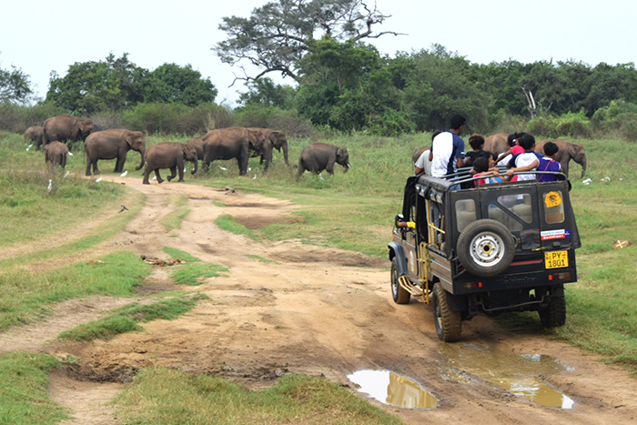 Safari jeep in Minneriya national park, Sri Lanka