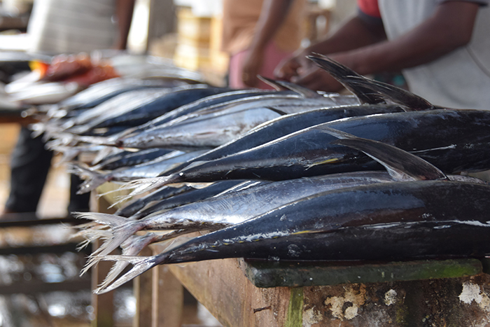 Morning Market at Negombo
