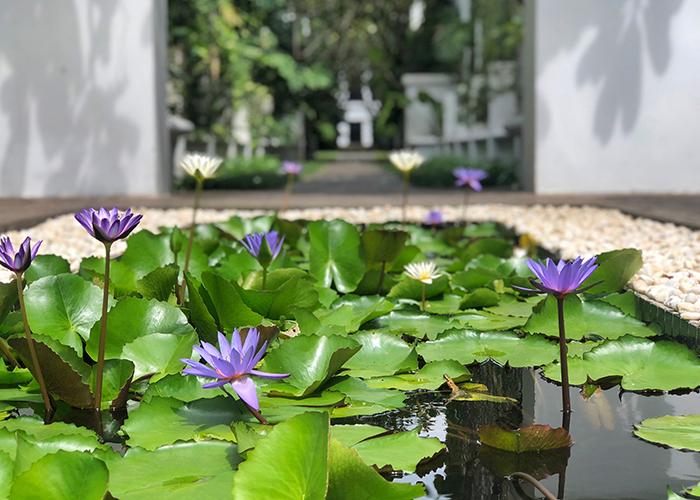 Lotus pond at The Siam Hotel Bangkok