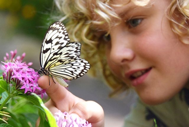 activities for kids at Singapore Changi Airport - Butterfly Garden © aleney de winter