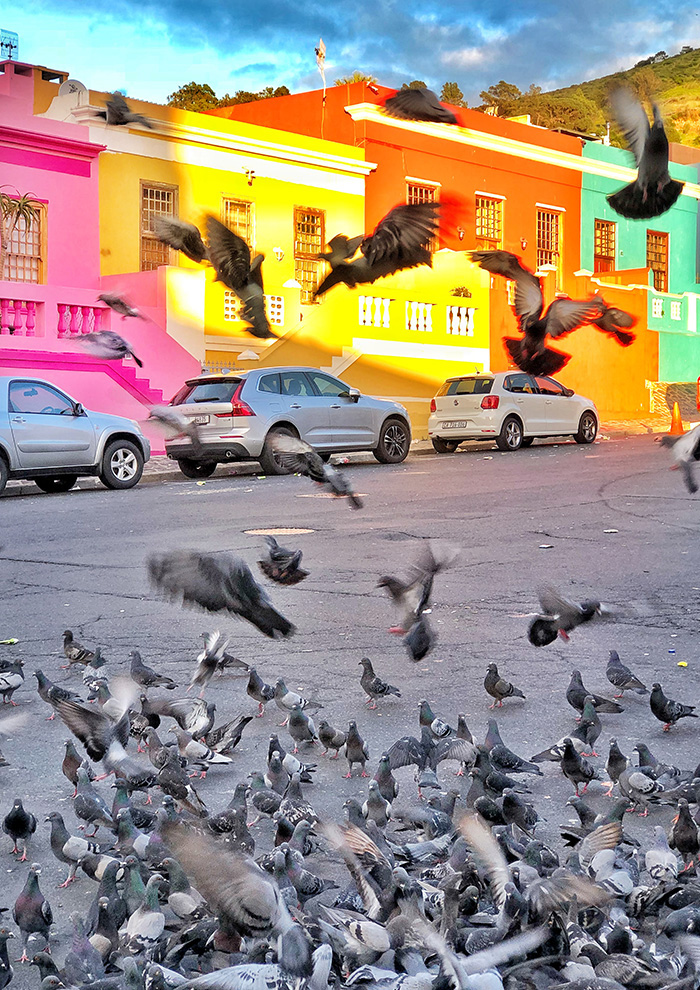 birds flapping around Bo Kaap in the morning sun