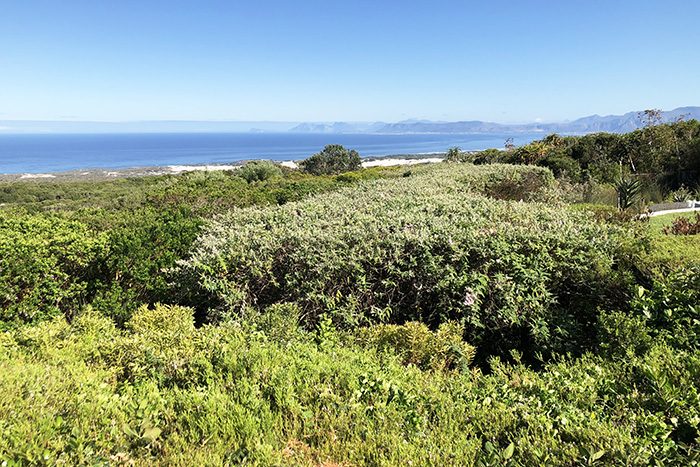 The views from our garden room at Grootbos Private Nature Reserve