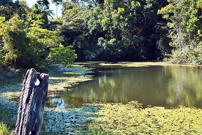 Platypus pond at Australian Platypus Park