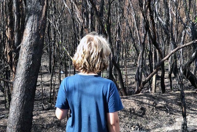 21 things kids can do to help Australia bushfire recovery