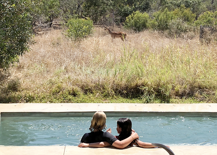 Kids watching wildlife from the private plunge pool in a luxury villa at Sabi Sabi Bush Lodge
