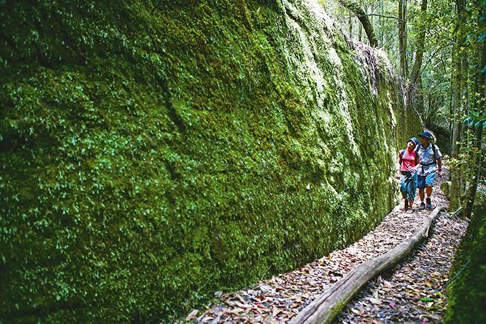Watagans Trail