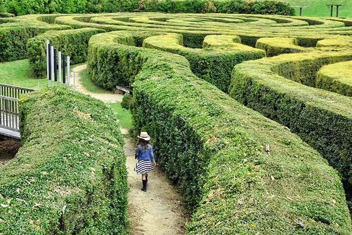Little girl in the maze at Bago Vineyard and Maze