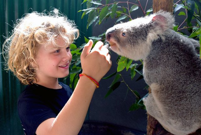 Little boy with koala at Billabong Zoo Port Macquarie