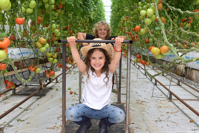 Kids fruit and tomato picking at Ricardoes Tomatoes