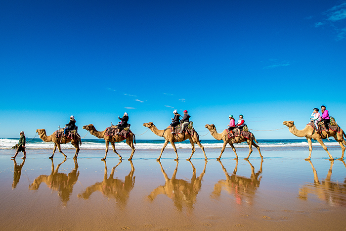 Port Macquarie's Camel Tour on Lighthouse Beach, Port Macquarie. Image © Lindsay Moller Productions / Port Macquarie Council