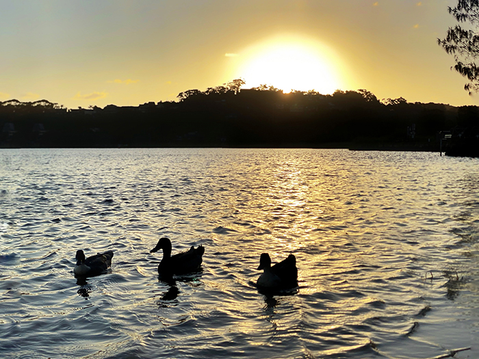 Sunset at Narrabeen Lagoon