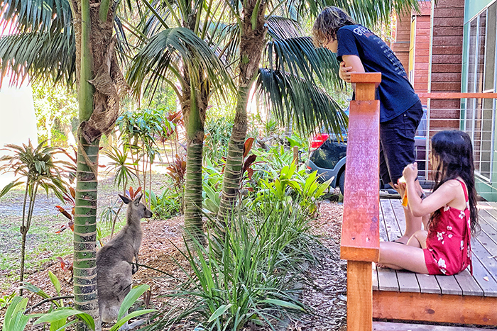 Kangaroo visiting at NRMA South West Rocks Holiday Resort © Aleney de Winter