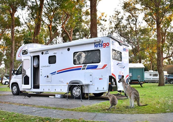 Kangaroos by a Lets Go Motorhome on the Coffs Coast