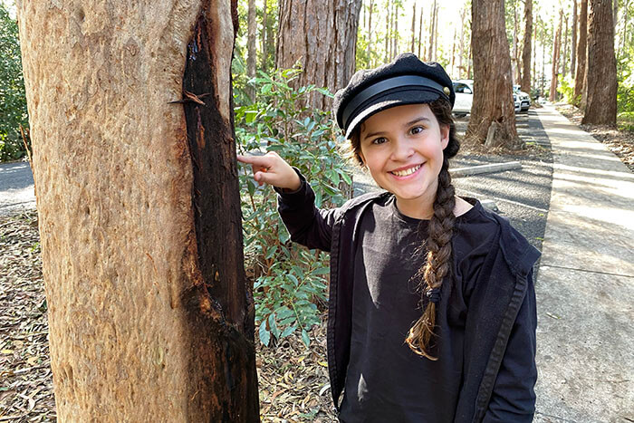 Scar Tree on the Giingan Gumbaynggirr Cultural Experience