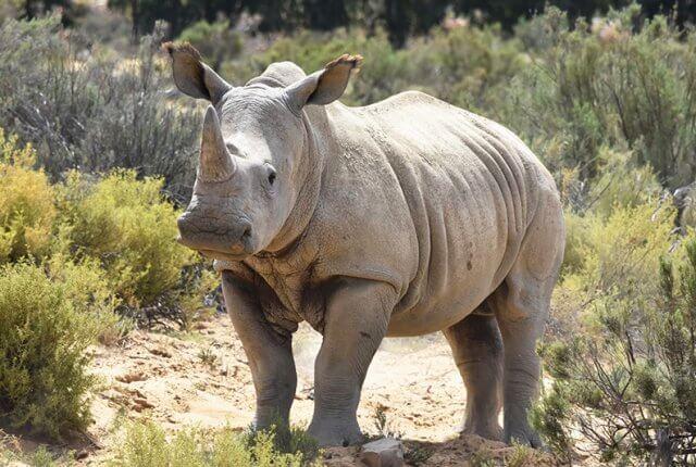 Saving Private Rhino ©Aleney de Winter